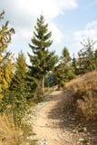 Wandernde Spur im Wald lizenzfreie stockfotos