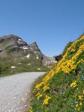 Wandernde Spur zum bachalpsee die Schweiz Lizenzfreies Stockbild