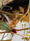 Wanderndes Insekt lizenzfreies stockbild