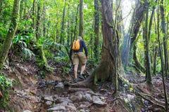 Wanderung in Costa Rica Lizenzfreies Stockfoto