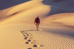 Wanderung in der Wüste Stockbilder