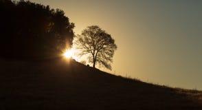 Wanderung des frühen Morgens an Cronan-Ranch Kalifornien als Sonne erscheint durch eine einzige Eiche und einen Wald lizenzfreies stockbild