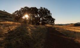 Wanderung des frühen Morgens an Cronan-Ranch Kalifornien als Sonne erscheint durch eine große Eiche stockfotos