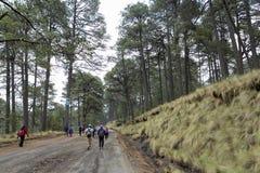 Wanderung in einem mexikanischen Wald Stockfotos