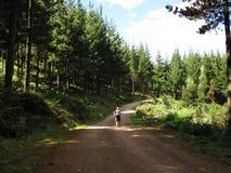 Wanderung im Kiefern-Wald, Hogsback Stockbild