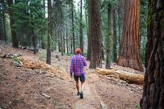 Wanderung im Wald Lizenzfreies Stockbild