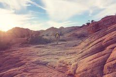 Wanderung in Utah Stockfotos