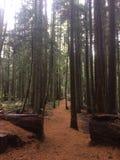 Wanderungen im Wald Lizenzfreies Stockbild