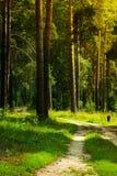 Wanderweg Stockfoto