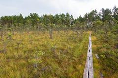 Wanderweg auf einem nassen Sumpf Stockfotografie