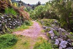 Wanderweg auf teneriffa auf Monte Frio eine Flechte-bedeckte alte Steinwand stockbild