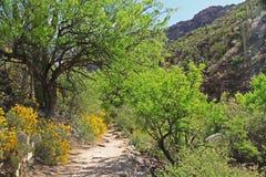 Wanderweg in der Bärn-Schlucht in Tucson, AZ lizenzfreies stockbild