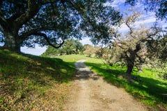 Wanderweg durch die Hügel und die Täler von Coyote See Harvey Bear Ranch County Park lizenzfreie stockfotos