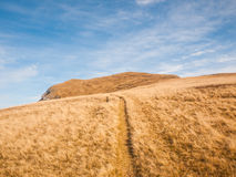 Wanderweg durch die Wiese stockfotos