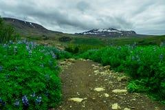 Wanderweg durch Feld von Blumen Stockfotos