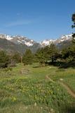 Wanderweg gezeichnet mit Wildflowers in den Bergen Stockfotografie