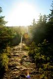 Wanderweg im Acadia-Nationalpark mit Sonnenlicht Lizenzfreie Stockfotos