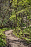 Wanderweg im Forestville-Nationalpark lizenzfreie stockfotografie
