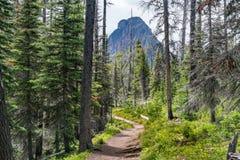 Wanderweg im Glacier Nationalpark lizenzfreies stockfoto