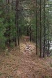 Wanderweg im Holz in Nord-Wisconsin lizenzfreie stockbilder