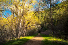 Wanderweg im Wald Lizenzfreie Stockbilder