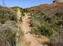 Wanderweg im Weißfisch-Ranch-Wildnis-Park stockbild