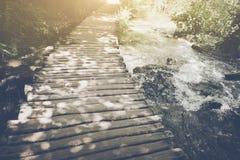 Wanderweg mit Sonnenlicht Lizenzfreies Stockfoto