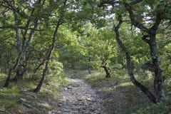 Wanderweg Provence Stockbild