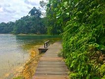 Wanderweg um Macritchie-Reservoir Singapur Stockfoto
