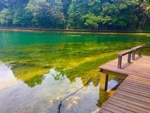 Wanderweg um Macritchie-Reservoir Singapur Stockfotos