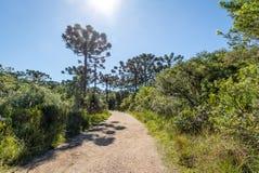 Wanderweg von Itaimbezinho-Schlucht bei Aparados DA Serra National Park - Cambara tun Sul, Rio Grande do Sul, Brasilien Stockfotos