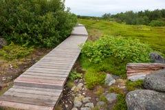 Wanderweg wird mit hölzernem Bodenbelag auf der Insel Bolshoy Zayatsky ausgerüstet stockfoto