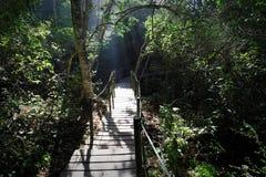 Wanderweg zur Sturm-Fluss-Hängebrücke, Nationalpark Tsitsikamma, Südafrika Lizenzfreies Stockfoto