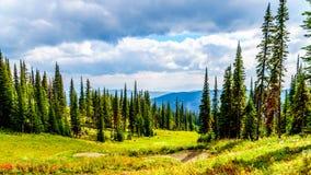 Wanderwege auf Tod Mountain nahe dem Dorf von Sun-Spitzen des Britisch-Columbia, Kanada stockbild