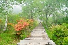 Wanderwege dand Rengetsutsuji stockfotografie