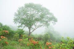 Wanderwege dand Rengetsutsuji stockfoto