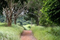 Wanderwege, Stoff mit Bäumen in Nationalpark Khao Yai in Thailand Lizenzfreie Stockbilder
