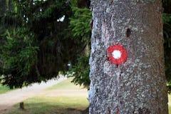 Wanderwegrotes und weißes Kreiskennzeichen auf Baumrinde Hinternummer eins darunterliegend geschrieben Flache Abteilung des Felde Stockfotografie