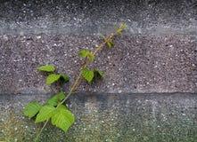 Wandhintergrund mit Grünpflanze Stockfotografie