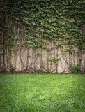 Wandkletterpflanze Lizenzfreie Stockfotos