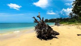 Wandoor海滩,布莱尔港, Andamans 库存图片