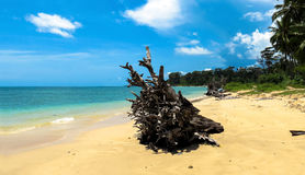 Wandoor Beach, Port Blair, Andamans. Driftwood on Wandoor Beach, Port Blair, Andaman and Nicobar Islands, India, Asia Stock Image