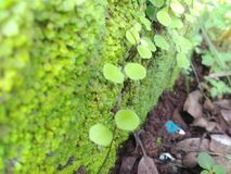 Wandschritte in der grünen Natur Lizenzfreie Stockfotografie