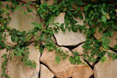 Wandverkleidung die Blätter lizenzfreies stockbild