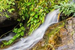 Wang Bua Ban-Wasserfall in Doi Suthep-Pui Nationnal Park, Chiang Stockfotos