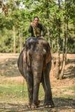 Wang Dong, Thailand, am 6. März 2016: Mahoutreiten auf seinem Elefanten in sanktuary von Elefanten, Elefant-Welt Stockfotografie