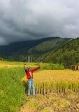 Wangdue Phodrang, Trongsa, Bhutan - September 15, 2016: Bhutanesisk bonde som rymmer en skära i en risfält på Wangdue Phodrang Arkivfoto