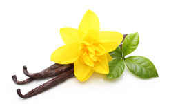 Wanilia kwiat i Zdjęcia Stock