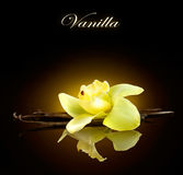 wanilia Strąki i kwiat wanilia Fotografia Stock