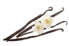 Wanilia wtyka z kwiatem i liściem na białym tle Odgórny widok Mieszkanie nieatutowy fotografia royalty free
